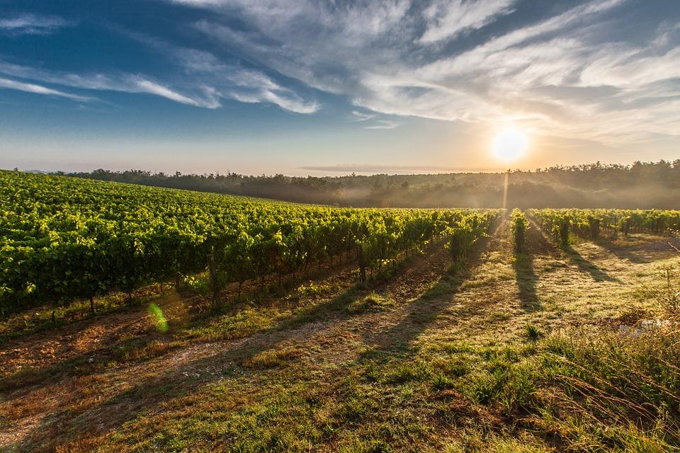 Comment photographier des bouteilles de vin ?